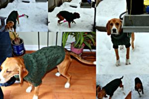 Free Cable Knit Dog Sweater Pattern