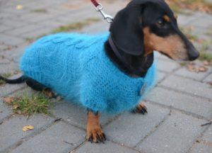 Knitting a Dog Coat for a Dachshund