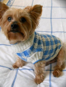 Flat Knit Dog Sweater Free Pattern