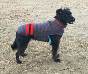 Easy Free Pattern to Knit a Sweater for Your Large Dog