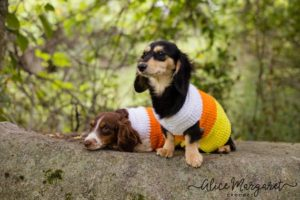 Candy Corn Free Knitted Dog Sweater Pattern