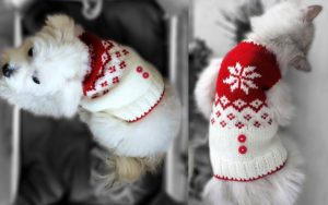 Free Dog Sweater Knitting Pattern for Christmas