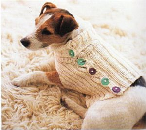 Dog Sweater Knitting Pattern for Beginners