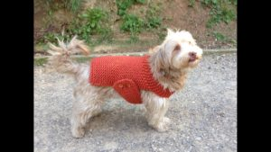 Knitting Pattern for Dog Sweaters on a Round Loom