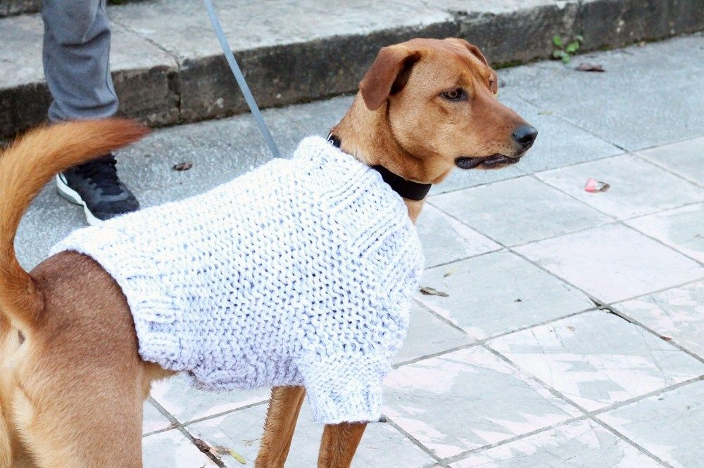Fall Dog Sweater Pattern for Large Dogs