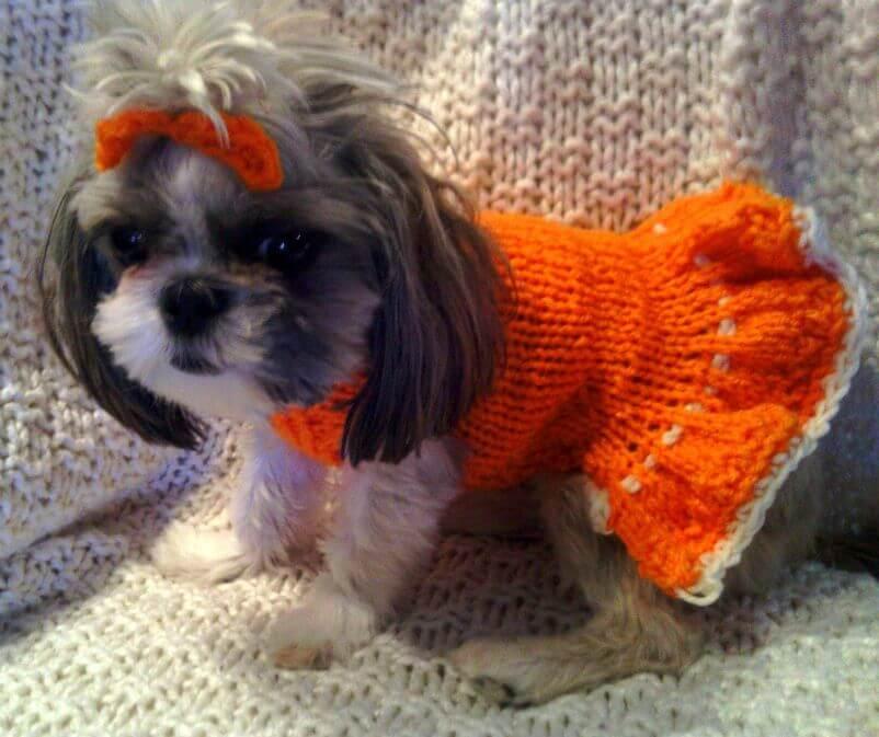 Bunny Dog Sweater Knitting Pattern