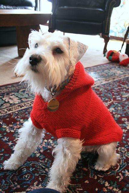 Hooded Dog Coat Knitting Pattern