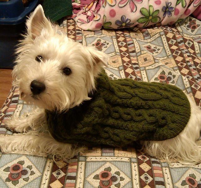 Cabled Dog Sweater Pattern